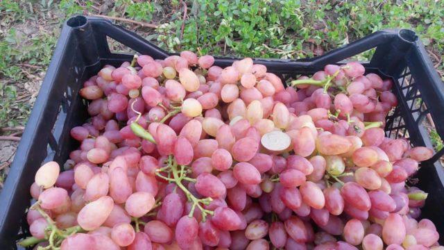 виноградные консервы
