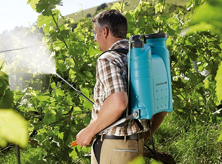 Летняя обработка винограда
